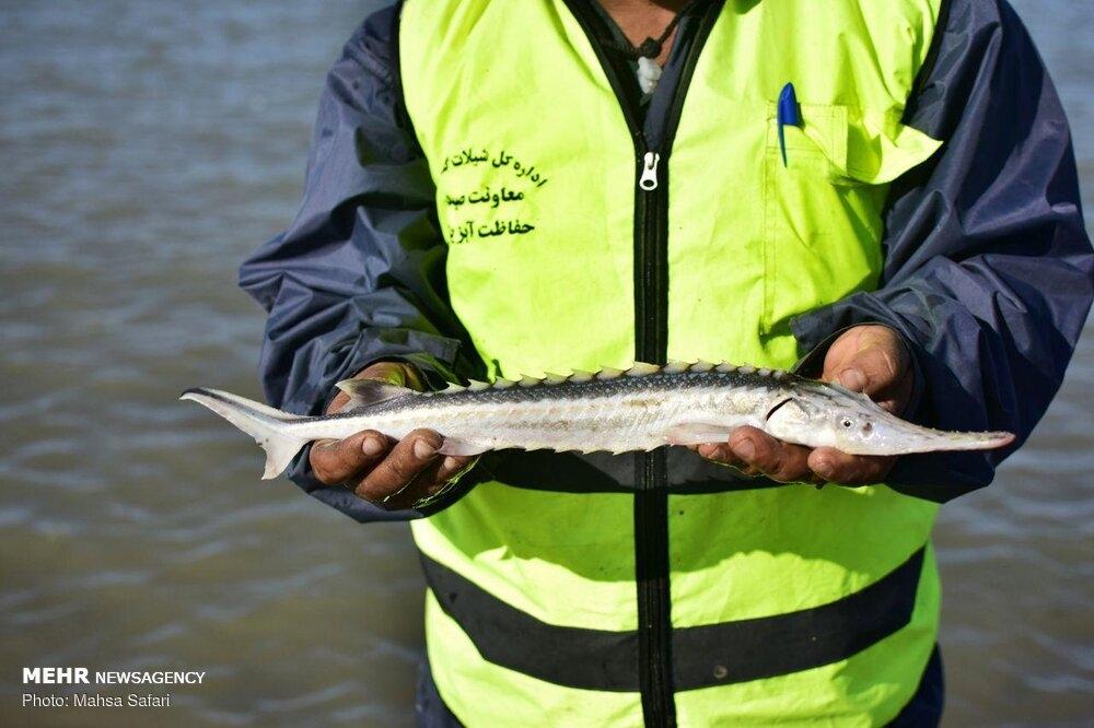 Fishing season begins in the Caspian Sea gallery image 13
