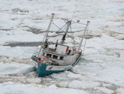 Icebreakers race to save seal ships
