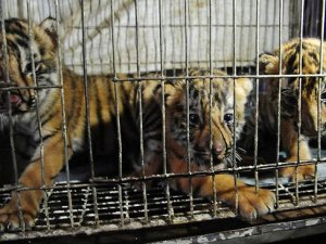 Illegal wildlife trade faces zero-tolerance policy