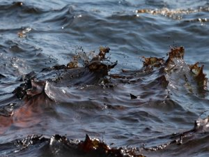 Oil spill near mouth of Mississippi