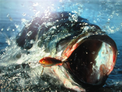 NMFS accepts bass regulations