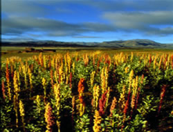 Australia set for grain crop