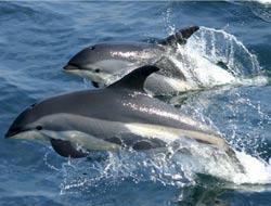 Dolphin alarm in Florida