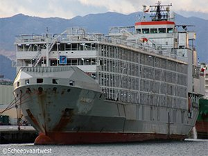 Livestock Carrier With 43 Crew Feared Lost in Typhoon off Japan