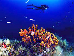 Scuba diving season open Ayvalik