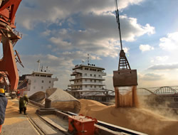 Import 17 Million Ton Soybeans