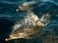 Dolphin to interact more closely