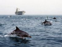 Federal Court Rules Against The US Navy, In Favor Of Whales