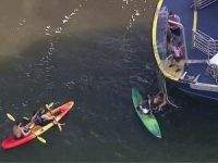 Kayakers Collide With New York Ferry