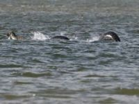 Some People Think This New Photo of the 'Loch Ness Monster' is Totally Legit