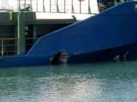 Italian cargo ship Luca S breached after collision with Turkish freighter Erdogan Senkaya at Porto Nogaro