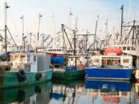 "NOAA Shuts Down 22 Fishing Boats over ""Codfather"" Scandal"
