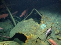 Australia Finds Wreck of First Allied Submarine to Sink in WW I