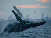 Biologists Urge Russia to Stop Capturing Whales