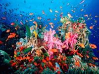 Coral Reefs Report Warns