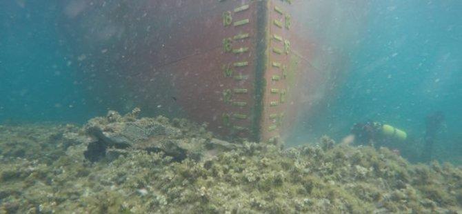 freighter-runs-aground-off-corsica-france1-667x500.jpg